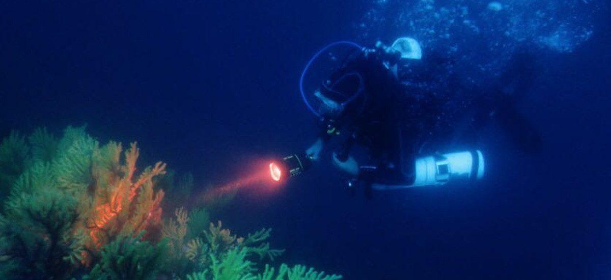 diving-slide-3-1200×550